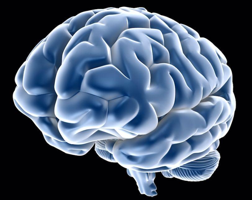 consumo energetico cervello